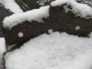 原木に積もる初雪
