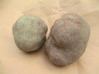 山の芋の種芋